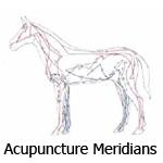 acupuncture_meridians3