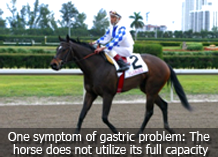 horse_keeping_3